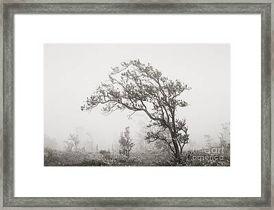 Ohia Lehua Tree Framed Print by Greg Vaughn - Printscapes