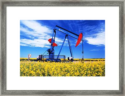 Oil Pumpjack And Canola Field, Arcola Framed Print by Dave Reede