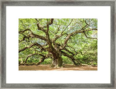 Old Angel Framed Print by Jon Glaser