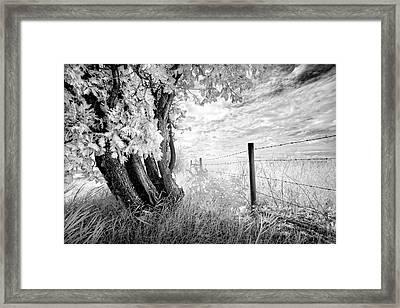 Old Cedar And Barbed Wire Framed Print by Dan Jurak