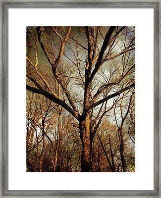 Old Faithful Framed Print by Amy Tyler