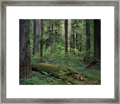 Old Growth Forest Framed Print by Leland D Howard
