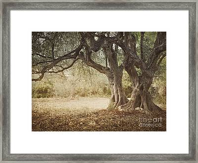 Old Olive Tree Framed Print by Mythja  Photography