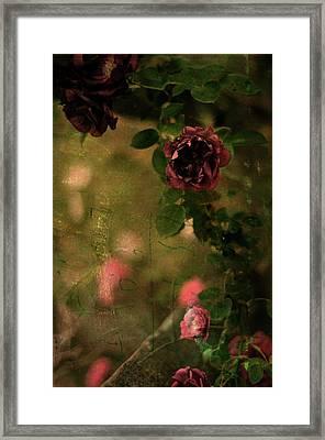 Old Roses Framed Print by Rebecca Sherman
