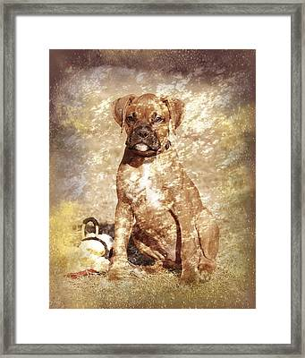 Old Time Boxer Portrait Framed Print by Angie Tirado