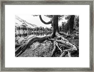 Old Tree Framed Print by Susanne La.