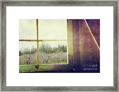Old Window Looking Out To Apple Orchard Framed Print by Sandra Cunningham