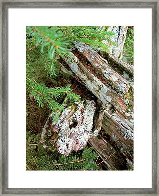 Old Wood Framed Print by Mark Sellers