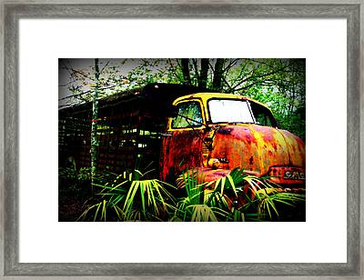 Ole Cow Truck Framed Print by Dana  Oliver