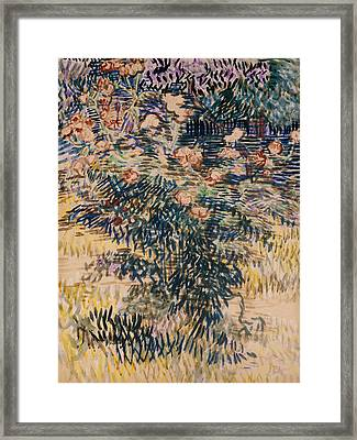 Oleanders, The Hospital Garden At Saint Remy, 1889 Framed Print by Vincent Van Gogh