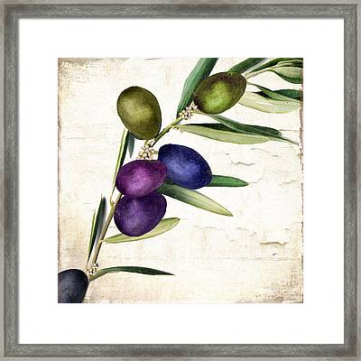 Olive Branch II Framed Print by Mindy Sommers