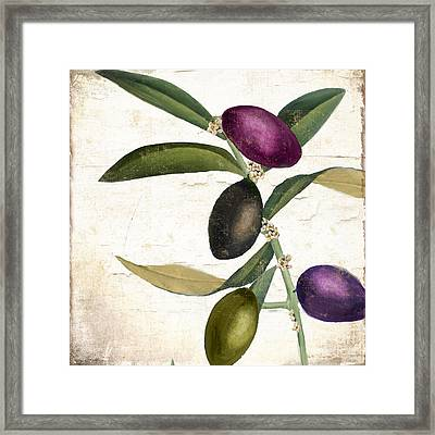 Olive Branch Iv Framed Print by Mindy Sommers