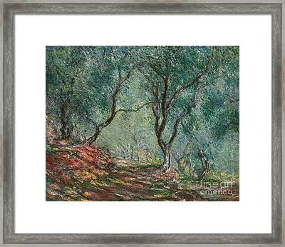 Olive Trees In The Moreno Garden Framed Print by Claude Monet