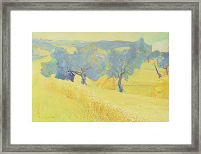 Olive Trees In Tuscany Framed Print by Antonio Ciccone
