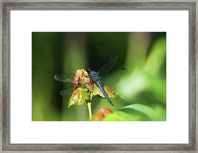 On A Leaf Framed Print by Karol Livote