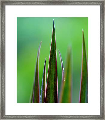 On Guard Framed Print by Melanie Moraga