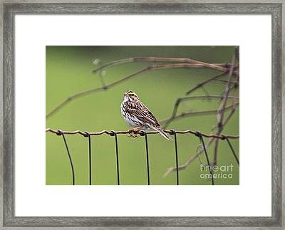 On The Fence Framed Print by Robert Pearson