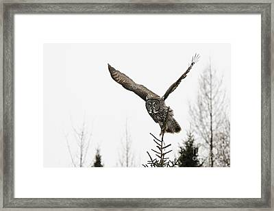 On The Hunt Framed Print by Larry Ricker