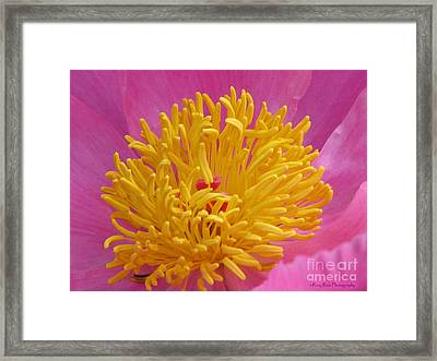 On The Inside Framed Print by Roxy Riou