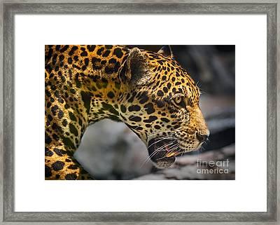 On The Prowl Framed Print by Jamie Pham