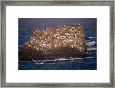 On The Rock Framed Print by Soli Deo Gloria Wilderness And Wildlife Photography