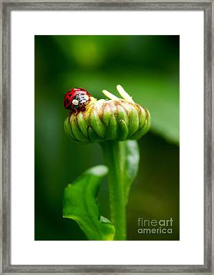 On Top Of My World Framed Print by Sharon Talson