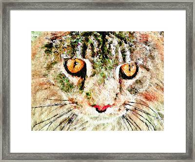 One Cool Cat Framed Print by Terry Mulligan