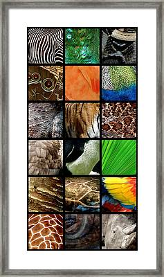 One Day At The Zoo Framed Print by Michelle Calkins