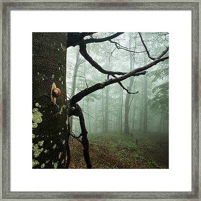 One Day Of The Snail's Life Framed Print by Evgeni Dinev