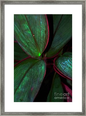 One Drop Of Water Framed Print by Skip Willits