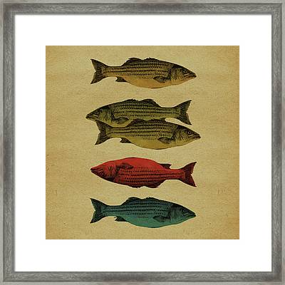 One Fish, Two Fish . . . Framed Print by Meg Shearer