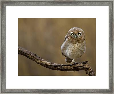 One Foot Framed Print by Amnon Eichelberg