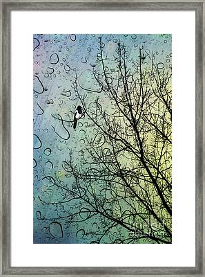 One For Sorrow Framed Print by John Edwards