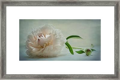 One Last Bloom Framed Print by Maggie Terlecki