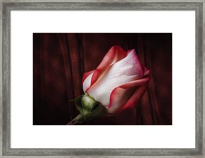 One Red Rose Still Life Framed Print by Tom Mc Nemar