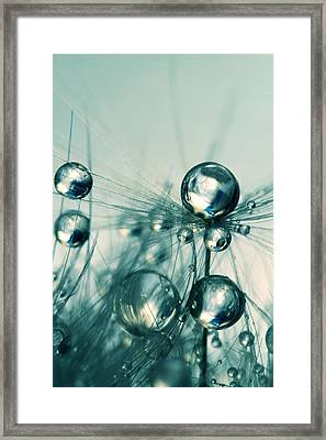 One Seed With Blue Drops Framed Print by Sharon Johnstone