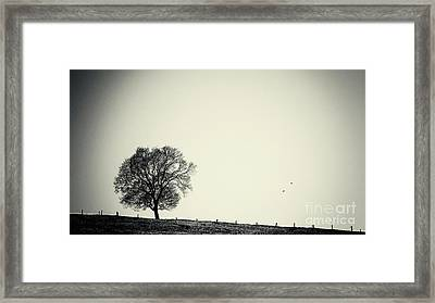 One Tree Framed Print by Angela Doelling AD DESIGN Photo and PhotoArt