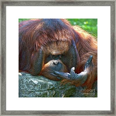 One Two Three  Framed Print by Heiko Koehrer-Wagner
