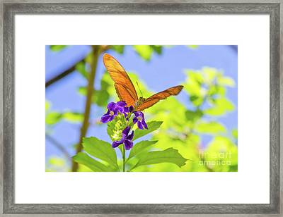 Only Have Eyes For You Framed Print by A New Focus Photography