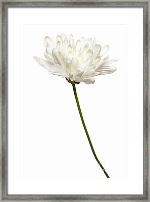 One White One Framed Print by Dan Holm
