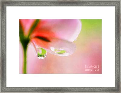 oOo Drops oOo Framed Print by SK Pfphotography
