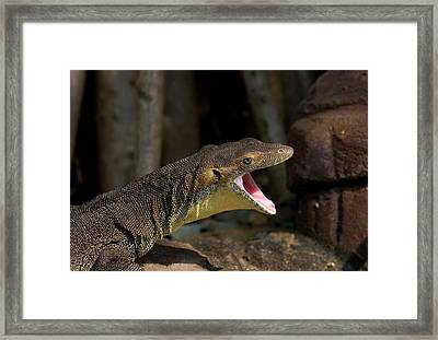 Open Wide Framed Print by Mike  Dawson