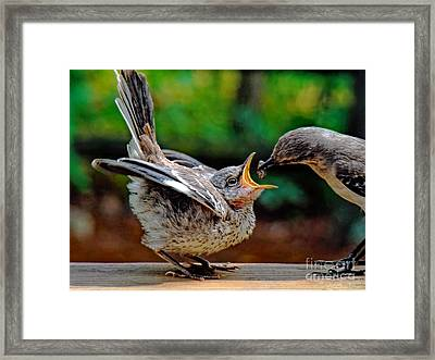 Open Wide Framed Print by Sue Melvin