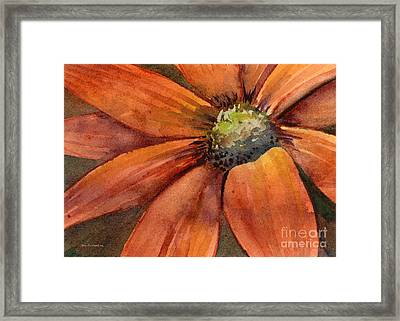 Orange Flower Framed Print by Amy Kirkpatrick