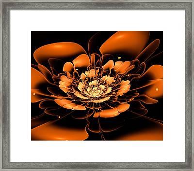 Orange Flower  Framed Print by Anastasiya Malakhova