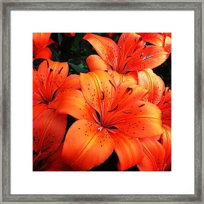 Orange Flower Framed Print by Carl Griffasi