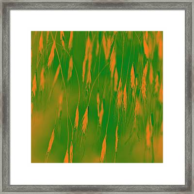 Orange Grass Spikes Framed Print by Heiko Koehrer-Wagner
