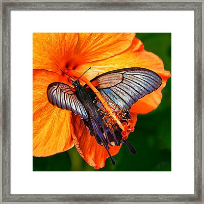 Orange Hibiscus Butterfly 2 Framed Print by Bill Caldwell -        ABeautifulSky Photography