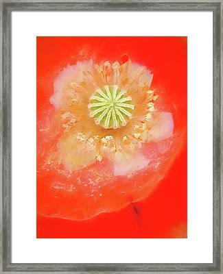 Orange Oriental Poppy Painterly Framed Print by Carol Leigh