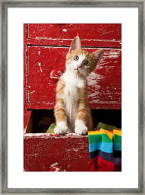 Orange Tabby Kitten In Red Drawer  Framed Print by Garry Gay